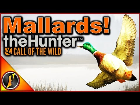 Ducks to Call of the Wild   What to Expect!