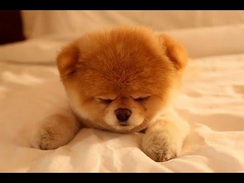 EVDE BESLENEBİLECEK  En Güzel 7 Köpek Türü