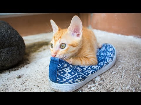 Most Cute and Lovable Cats - Funny Cat Videos - Everything Cats (2019)