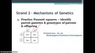 Biology EOC Review - Strands 2&3-Genetics,Evolution,Taxonomy
