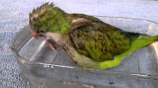 Monty's first bath