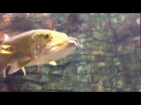 Cabela's Aquarium in Hamburg, Pennsylvania