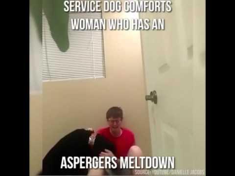 Here's How A Dog Can Help Stop An Aspergers Meltdown   HuffPost Life