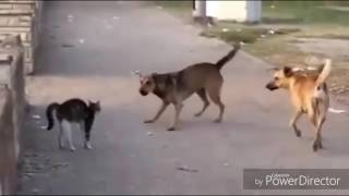 Funny video sher marna