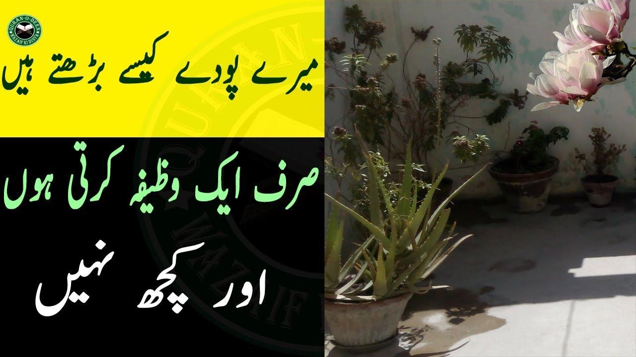 Plants Ki Growth Ka Wazifa Pody Ab Buhat Barhengy Dino Main Pody Barhane Ka Wazifa Youtube