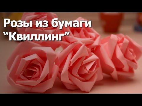 Розы из бумаги - Квиллинг