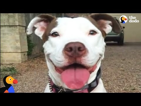 Neglected Pit Bull Dog Convinces Woman To Adopt Her | The Dodo