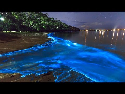 Светящийся пляж на Мальдивах - Интересные факты