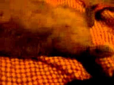 Le Chat Qui Savait Voler... Ou Pas