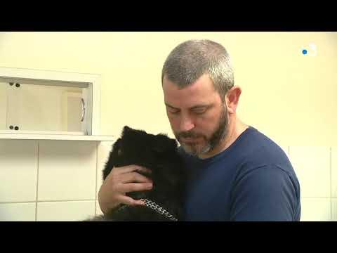 Malgré le Coronavirus, les vétérinaires continuent leur activité et adaptent les soins aux animaux.