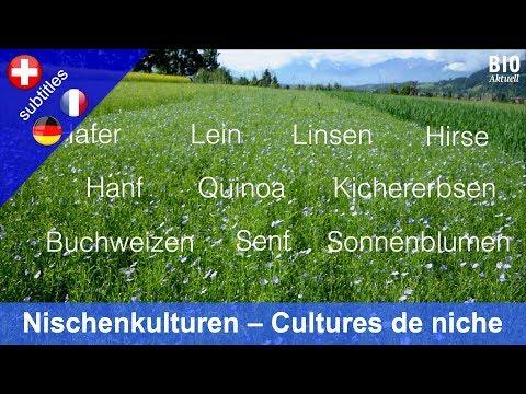 Nischenkulturen: Anbau & Markt (Hafer Lein Linsen Hirse Hanf Quinoa Senf Buchweizen Kichererbsen)