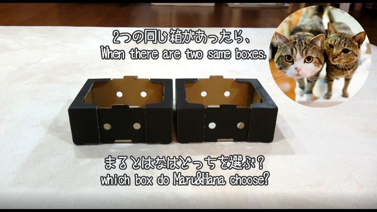 二つの同じ箱とまるとはな-two-same-boxes-and-maru