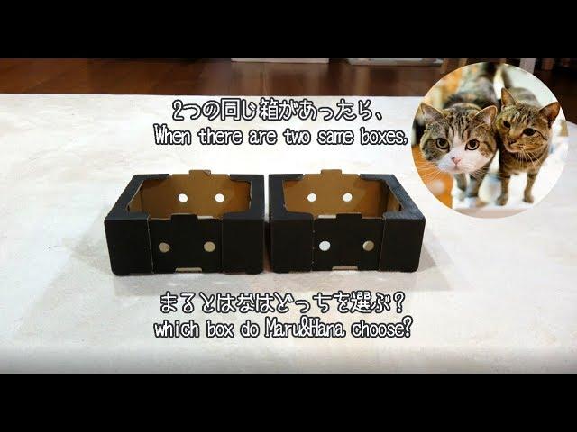 二つの同じ箱とまるとはな。-Two same boxes and Maru&Hana.-
