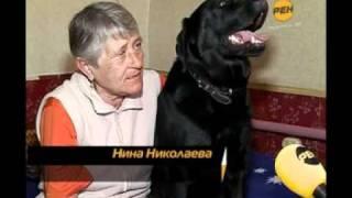 Собака-поводырь.flv