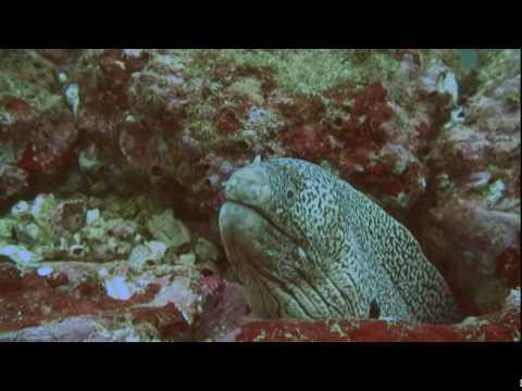Dive Black Rock, Bat Islands in Costa Rica with Rich Coast Diving.