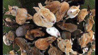 Самые редкие породы кроликов