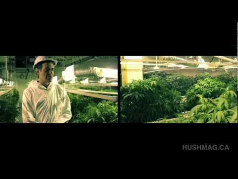 Drugonomics II - The Legal Grow Op - Hush Magazine - Vancouver