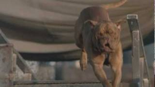 Turner and Hooch promo for Hallmark Channel