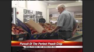 Georgia Farmers In Pursuit Of The Perfect Peach Harvest