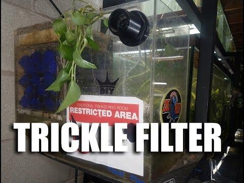 How I filter my Oscar tank