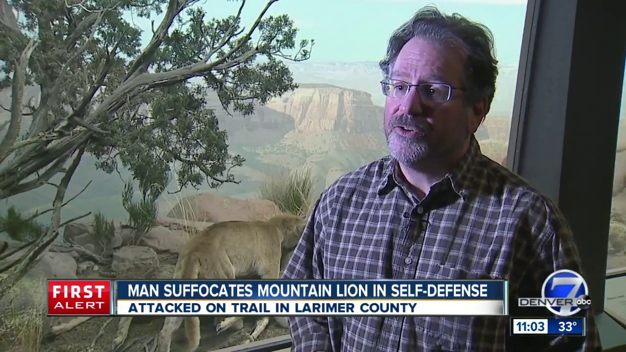 A jogger choked a mountain lion to death after being attacked, then hiked to a ...