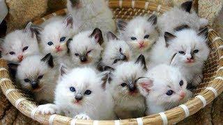 おかしい猫 - かわいい猫 - おもしろ猫動画 HD #207 https://youtu.be/g...