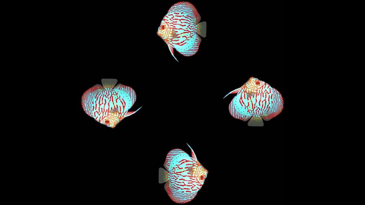 фото для голограммы обшивкой свесов