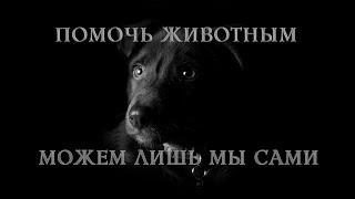 Безвозмездная помощь животным по всему миру! Помоги потеряшкам по всей стране! Приложение Лапки!