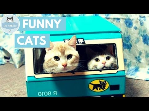 Funny Cats And Cute Kittens #10 ✔
