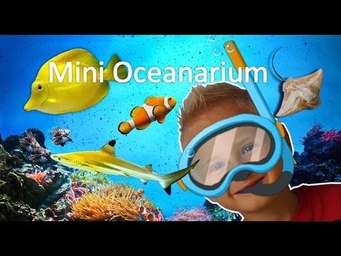Outdoor activities for kids: Mini Oceanarium / Aquarium / See Life visit in Kolobrzeg. Blue Orange