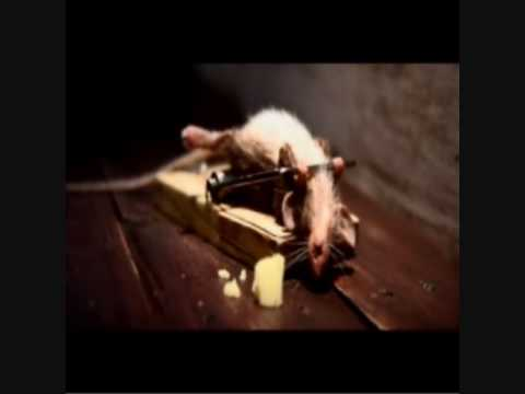Mouse and a mousetrap (cheese commercial)
