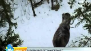мамонты в Сибири