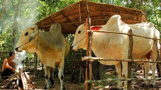 Build Hut for cow - House cow