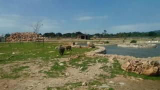 Mallorca ZOO Safari