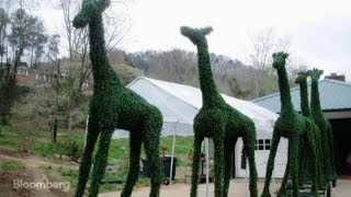 See the Giant Green Garden Creatures Worth $80K