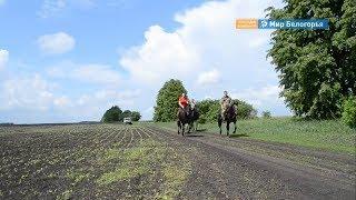 Конный пробег проведут в Корочанском районе