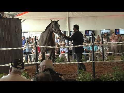 Forecon Macho Uno Colt 3-3-11 Horse Racing Partnership