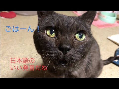 日本語でごはーんって発音良く喋ってくれました。