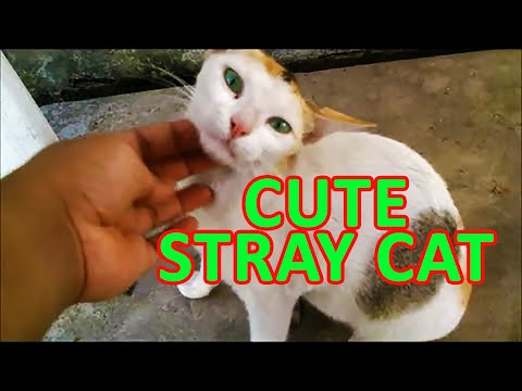 Lovely stray cat likes to get petted !