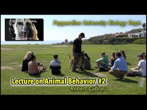 Pepperdine University - Robert Cabral Dog Trainer and Behaviorist - Animal Behavior Lecture Clip #2