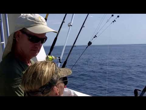 Now Or Never Hooks 1,000 Lb Plus Blue Marlin Off North Carolina  WARNING  Adult Language!