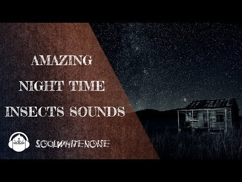 Awesome Night Time Insects Sounds | In search of ZEN