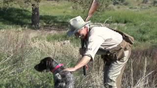 Dog Training & Bird Hunting Tip: Get Harmonious With Your Hunting Dog - Wingshootingusa.org