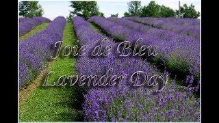 Joie de Bleu Lavender Day