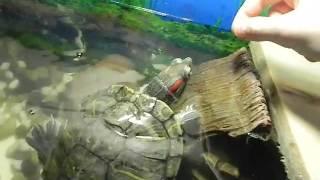 Как я сделал плотик для Водных черепах