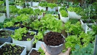 Aprenda a Preparar um Excelente Adubo Para Suas verduras e Hortaliças