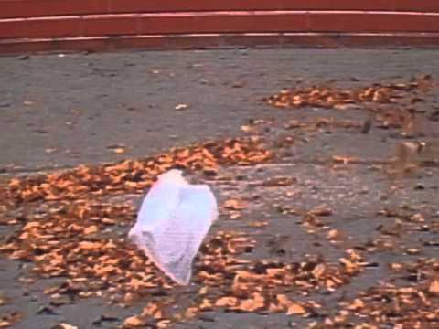 American Beauty  Thomas Newman from the plastic bag scene