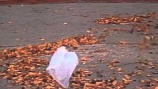 'American Beauty' - Thomas Newman (from the 'plastic bag scene')(Just the music (Track 8, 'American Beauty', from the 'American Beauty: Original Motion Picture Score') and the bag... This track is NOT
