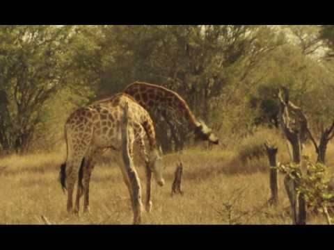 La fête sauvage   Documentaire