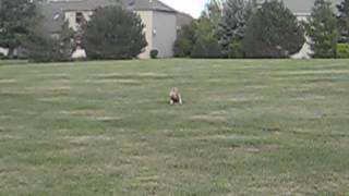 Cute Child Running wild
